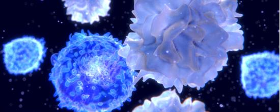 La microbiota regula el sistema inmune