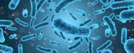 Mikrobiom der Mutter relevant für ASS-Risiko
