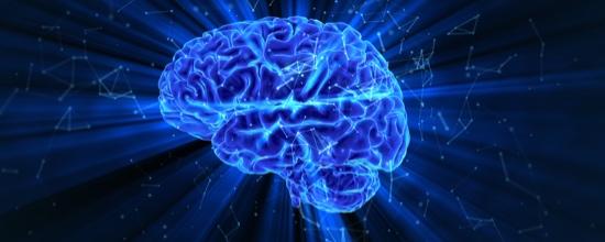 Brein